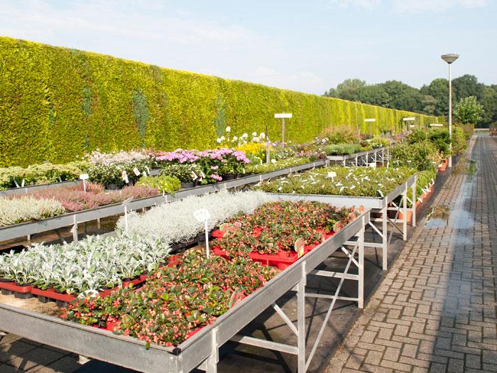 Tuinplanten en perkgoed