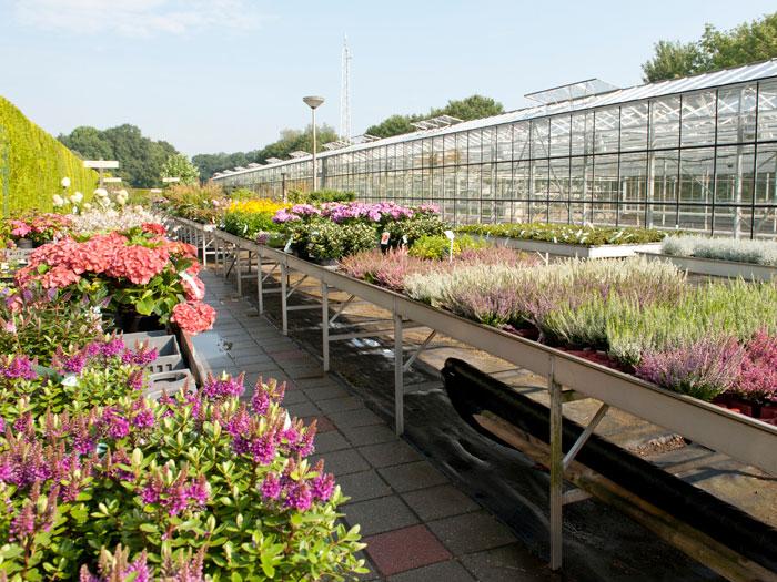 Buitenplanten, groenten en kruiden